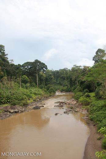 Segama river -- borneo_4348
