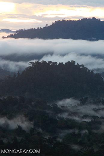 Sunset over the Borneo rainforest -- borneo_4405
