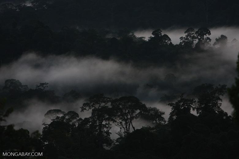 Sunset over the Borneo rainforest -- borneo_4420