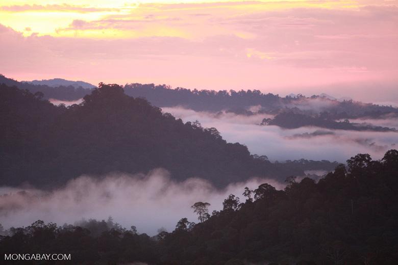 Sunset over the Borneo rainforest -- borneo_4431