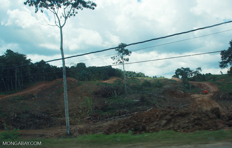 Forest land cleared for oil palm -- borneo_4472