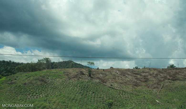 Forest land cleared for oil palm -- borneo_4479