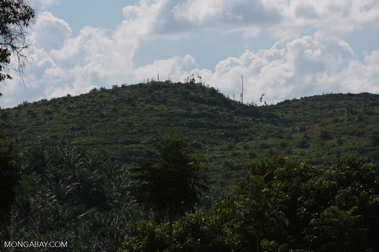 Oil palm plantation established on former rainforest land -- borneo_4766