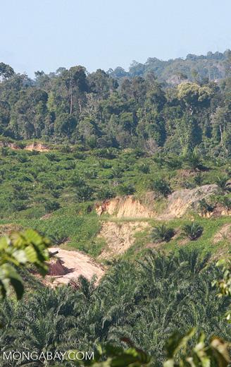 Oil palm plantation established on former rainforest land -- borneo_4770