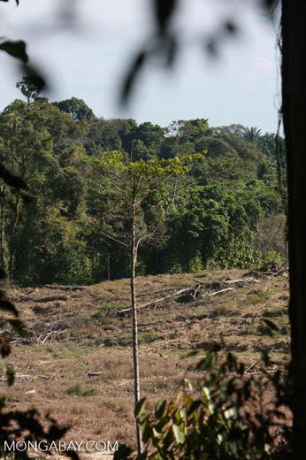 Deforestation in Sabang