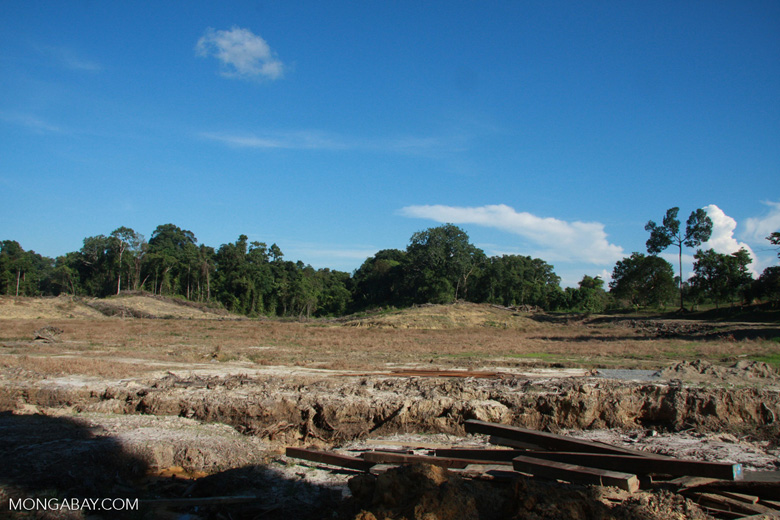 Deforestation in Sabang -- borneo_4786