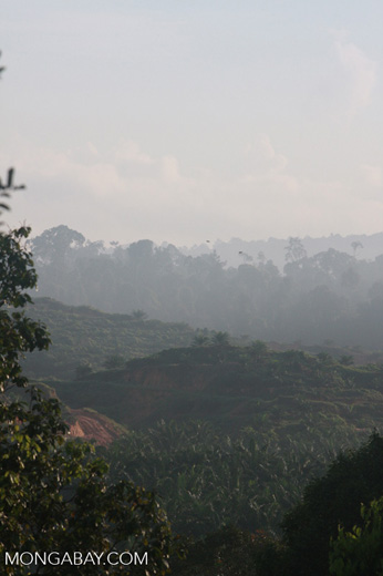Haze rising from an oil palm plantation established on former rainforest land -- borneo_4890