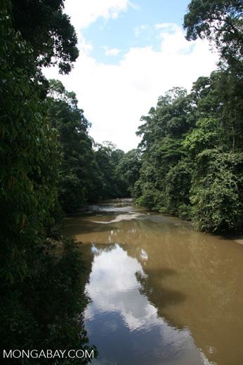 Danum river -- borneo_6090