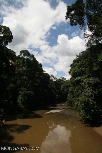 Danum river -- borneo_6098