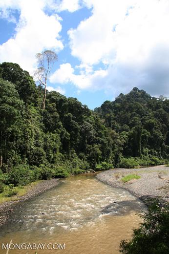 Danum river
