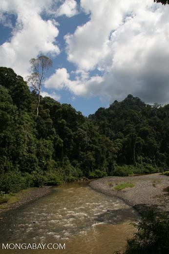 Danum river -- borneo_6168