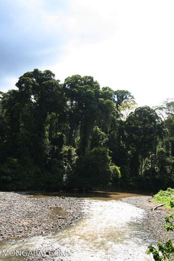 Danum river in Borneo -- borneo_6179