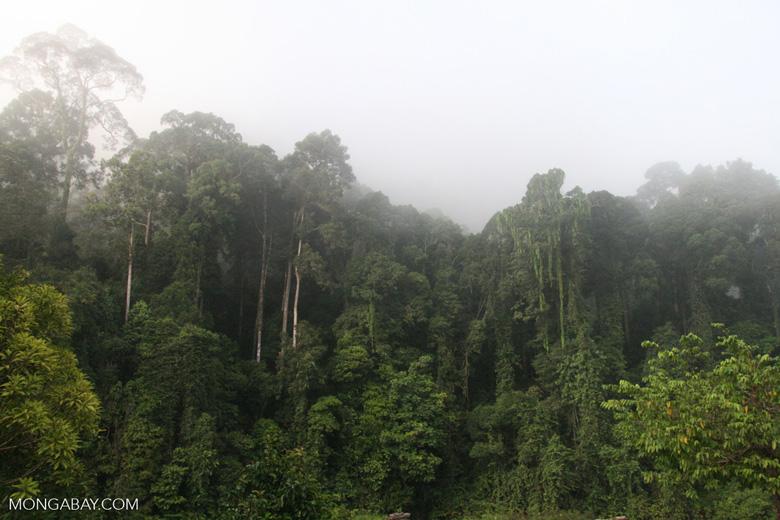 Borneo rainforest -- borneo_6245