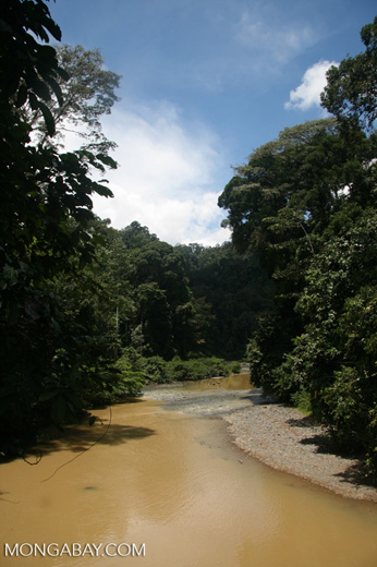 Borneo rainforest -- borneo_6294