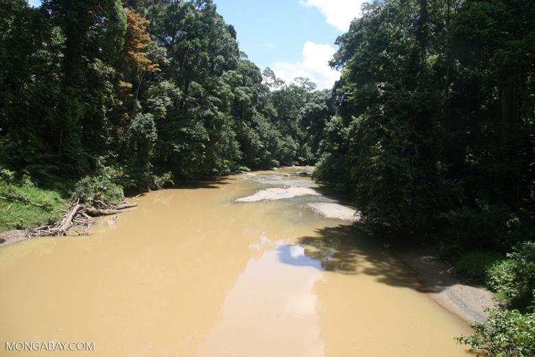 Borneo rainforest -- borneo_6298