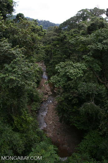 Borneo rainforest creek