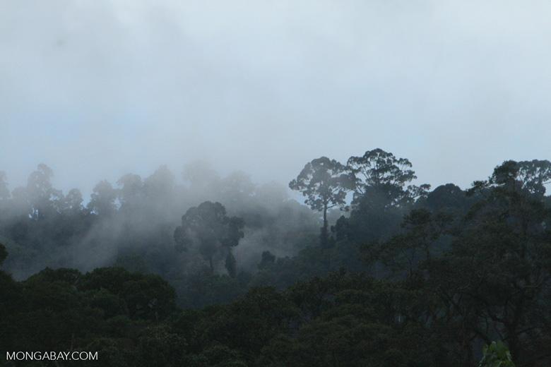 Mist rising from the Borneo rainforest -- borneo_6420