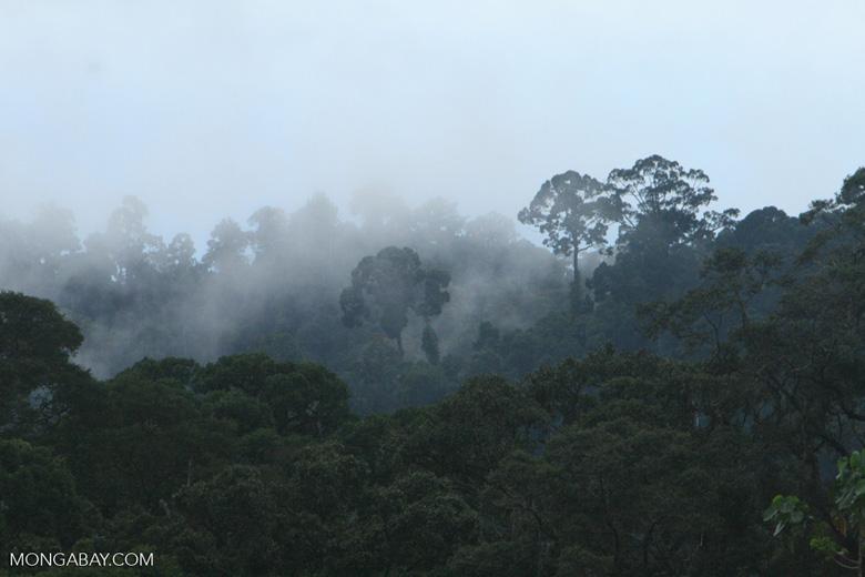 Mist rising from the Borneo rainforest -- borneo_6421