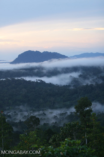 Mist rising from the Borneo rainforest -- borneo_6433
