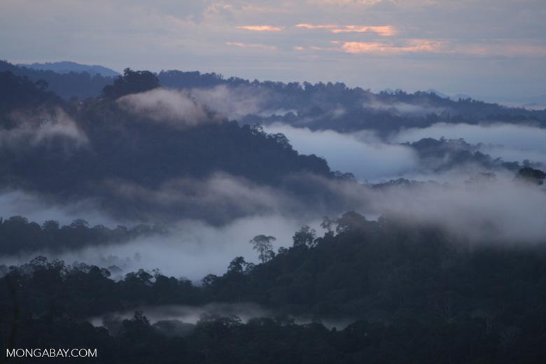 Mist rising from the Borneo rainforest -- borneo_6441