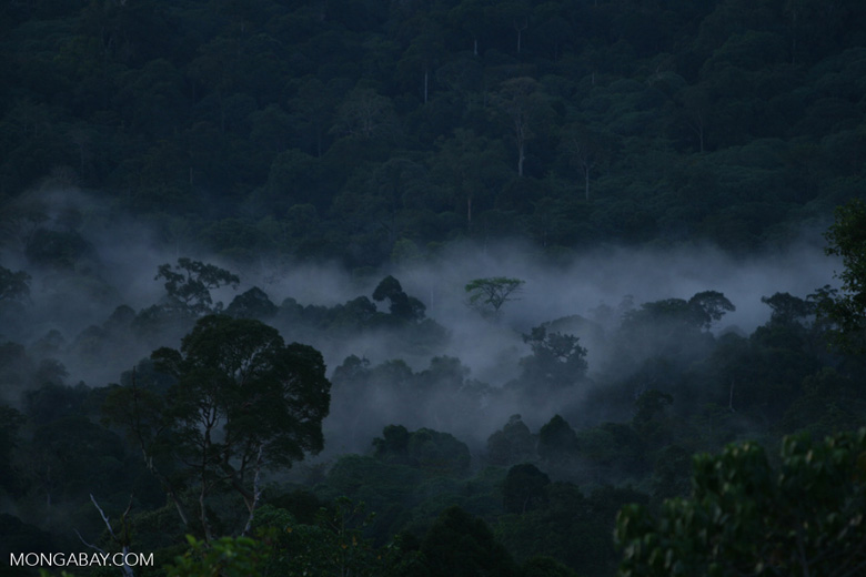 Mist rising from the Borneo rainforest -- borneo_6443