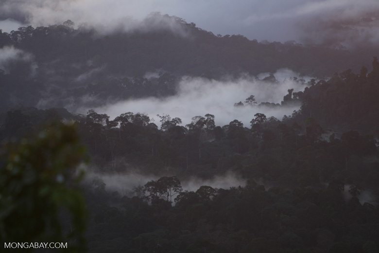 Mist rising from the Borneo rainforest -- borneo_6444