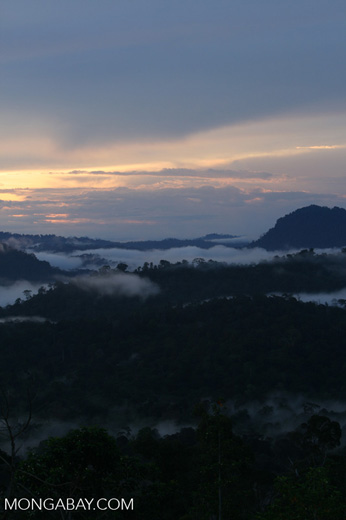 Mist rising from the Borneo rainforest -- borneo_6447