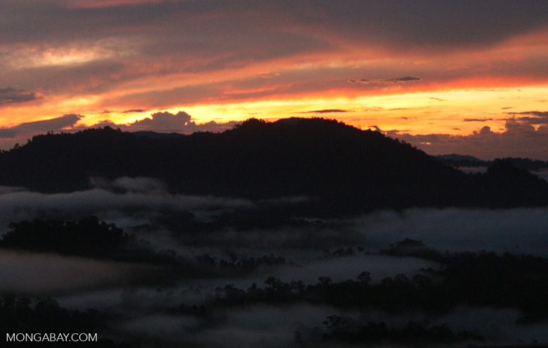 Mist rising from the Borneo rainforest at sunset -- borneo_6466