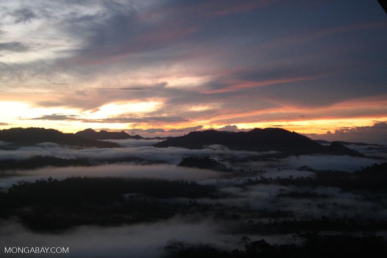 Mist rising from the Borneo rainforest at sunset -- borneo_6468