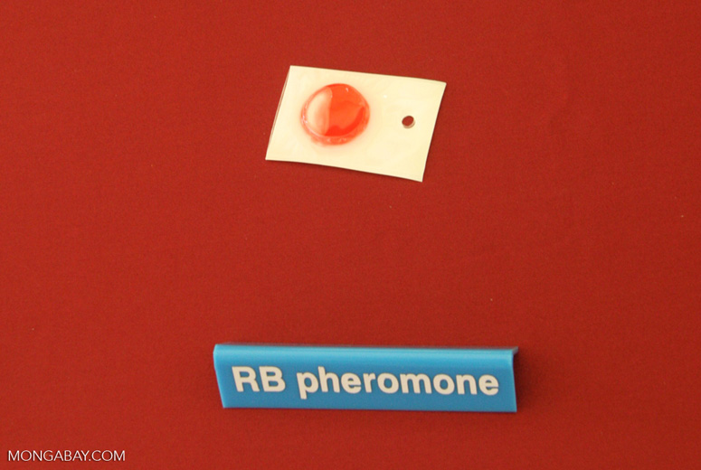 RB pheromone for attracting rhinoceros beetles, an oil palm pest