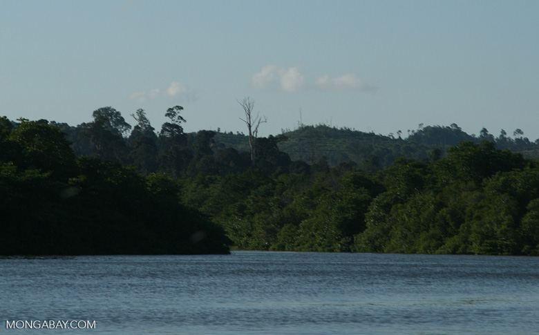 Oil palm plantation in a deforested area along the Sabang river