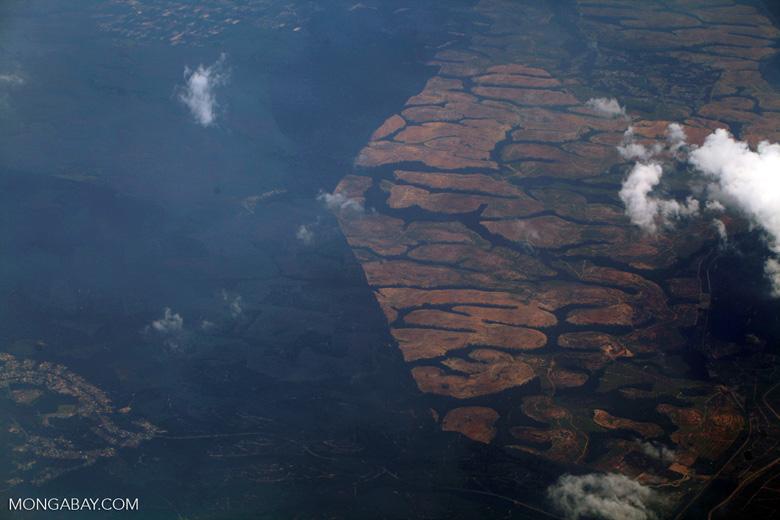 Oil palm on peatland -- sabah_0037