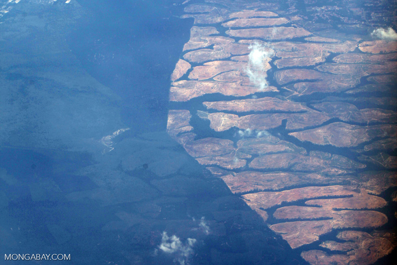 Oil palm on peatland -- sabah_0042