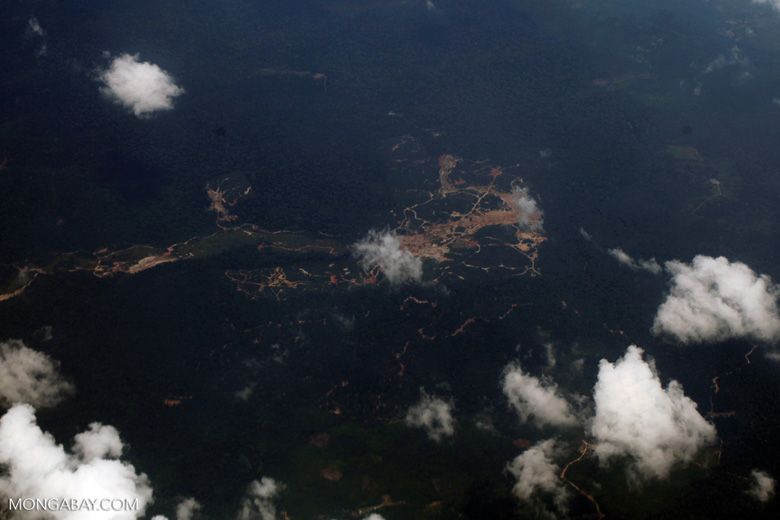 Oil palm on peatland -- sabah_0046