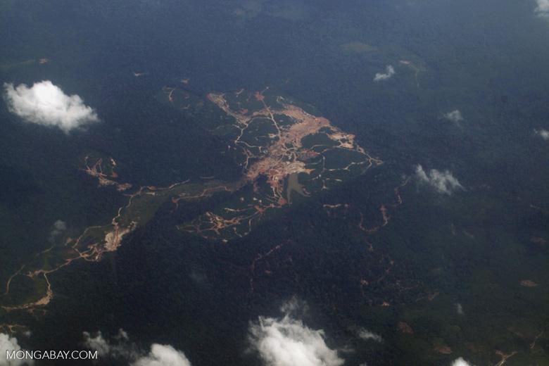 Oil palm on peatland -- sabah_0048