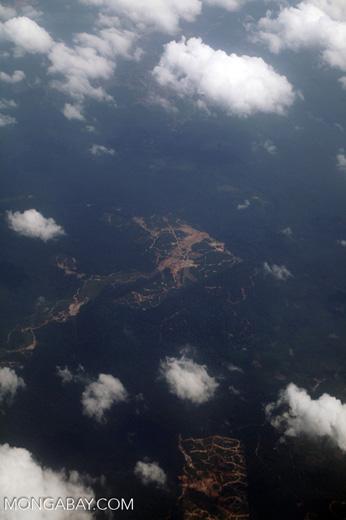 Oil palm on peatland -- sabah_0049