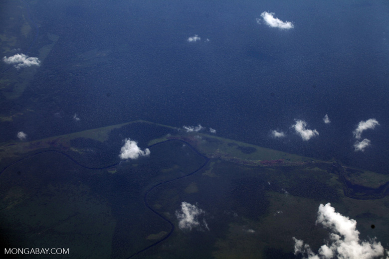 Oil palm on peatland -- sabah_0051