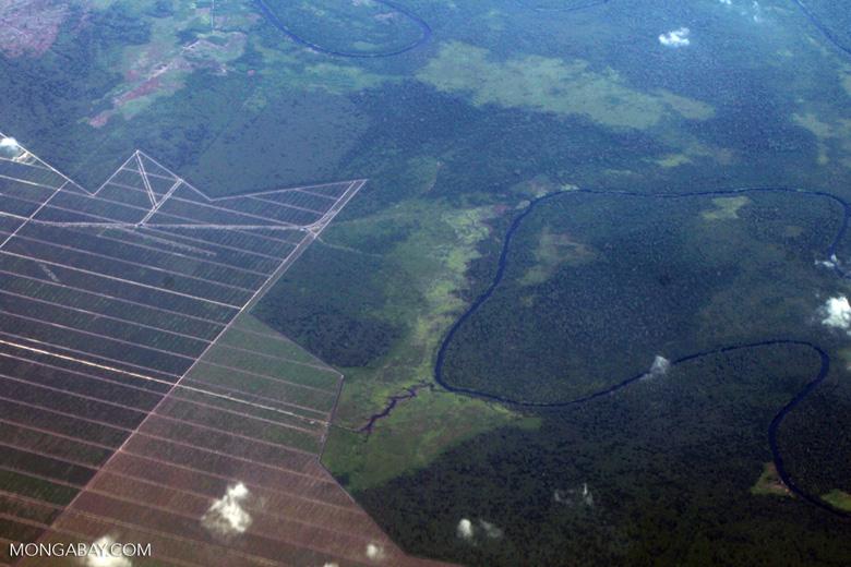 Oil palm on peatland -- sabah_0054