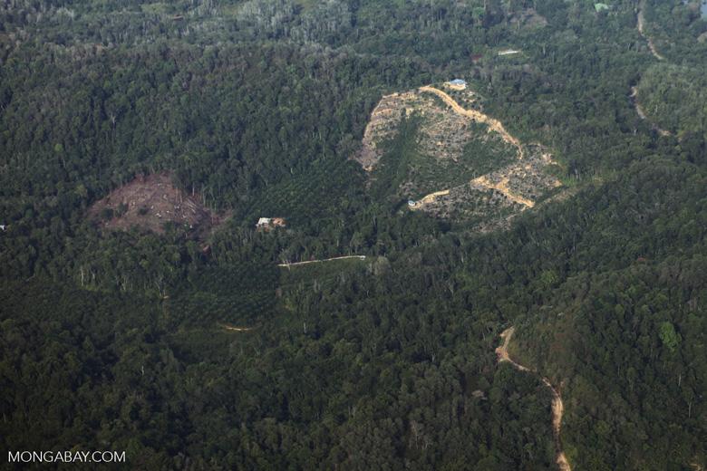 Deforestation -- sabah_0087