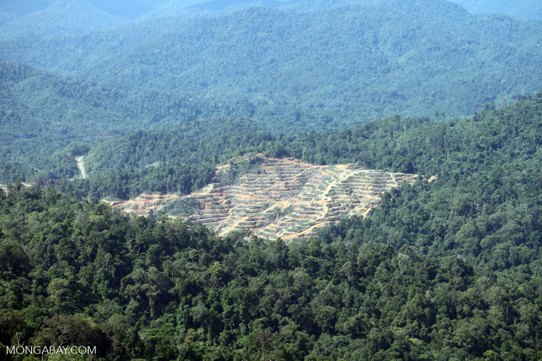 Loss of rainforest in Malaysian Borneo -- sabah_0309