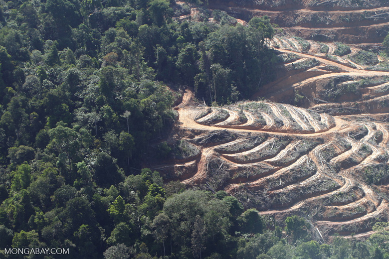 Lowland forest loss in Malaysia