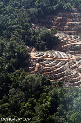 Loss of lowland rainforest in Malaysian Borneo