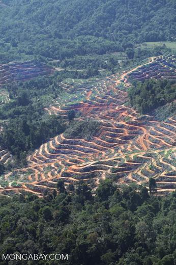 Deforestation in Borneo -- sabah_0334
