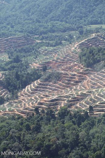 Deforestation in Malaysia -- sabah_0336