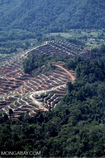 Forest loss in Malaysia -- sabah_0340