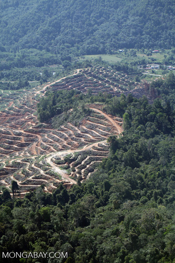 Loss of rainforest in Malaysian Borneo -- sabah_0341