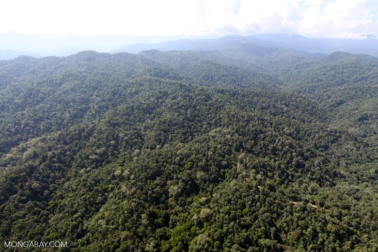 Borneo rainforest -- sabah_0346