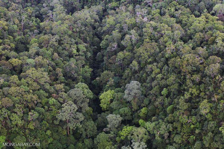 Borneo rainforest -- sabah_0356