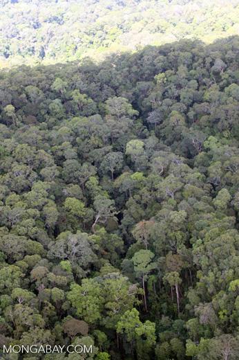 Borneo rainforest -- sabah_0360