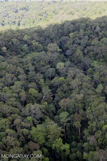 Borneo rainforest -- sabah_0361